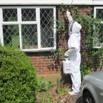 wasp nest removal surrey