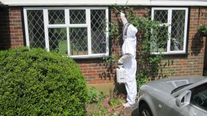 wasp nest removal dorking